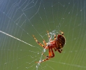 spider_in_web_2