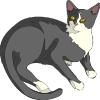 katten_22