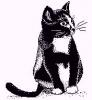 katten_27