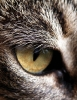 katten_38
