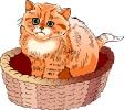 katten_49