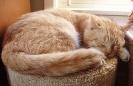 katten_56