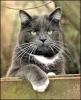 katten_57