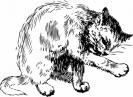 katten_73