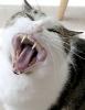 katten_75