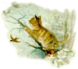 katten_77