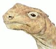 Abrosaurus_head