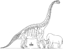 Brachiosaurus_elephant_man_compared