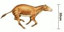 Eohippus__tiny_horse_ancestor