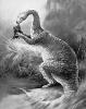 magalosaurus
