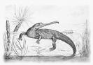 Mystriosuchus
