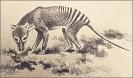 Tasmanian_wolf