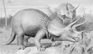 triceratops_3