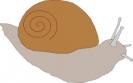 snail_4