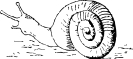 snail_5