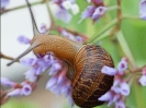 snail_on_flower