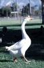 vogels foto_102