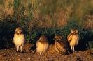 vogels foto_103