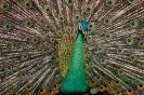 vogels foto_104