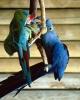 vogels foto_105