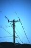 vogels foto_108
