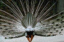 vogels foto_110