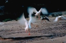 vogels foto_111
