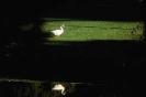 vogels foto_112