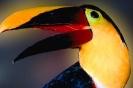 vogels foto_113