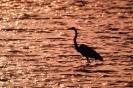 vogels foto_115