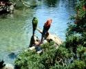 vogels foto_118