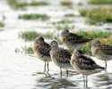 vogels foto_120