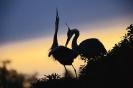 vogels foto_123