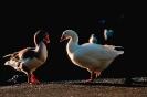 vogels foto_124