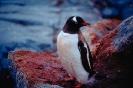 vogels foto_126
