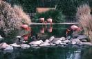 vogels foto_127