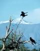 vogels foto_128
