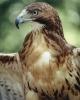 vogels foto_129