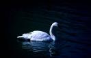 vogels foto_131