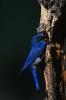 vogels foto_132