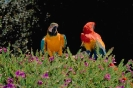 vogels foto_134