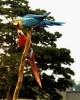 vogels foto_17