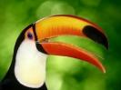 vogels foto_19