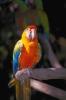 vogels foto_20