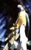 vogels foto_21