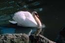 vogels foto_22