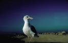 vogels foto_23