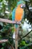 vogels foto_26