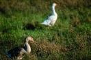 vogels foto_28
