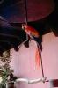 vogels foto_2